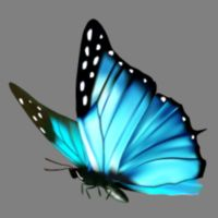 Butterfly Blue 02 Thumbnail