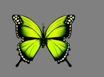 Butterfly Lime yellow 01
