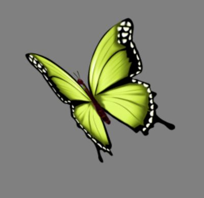 Butterfly Lime yellow 02