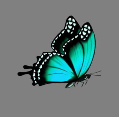 butterfly Turq Teal Blue 02