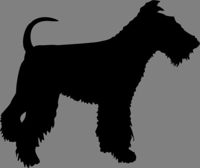 Dog 16 Fox Terrier